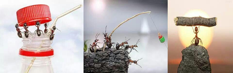 Super-hormigas