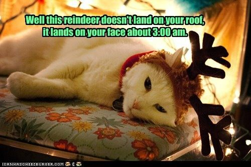 Today S Lol Christmas Is Getting Closer Woohoo How S Going Ur Christmas Shopping Christmas Cats Pet Holiday Crazy Cats