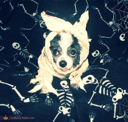 Mummy's Boy - 2014 Halloween Costume Contest