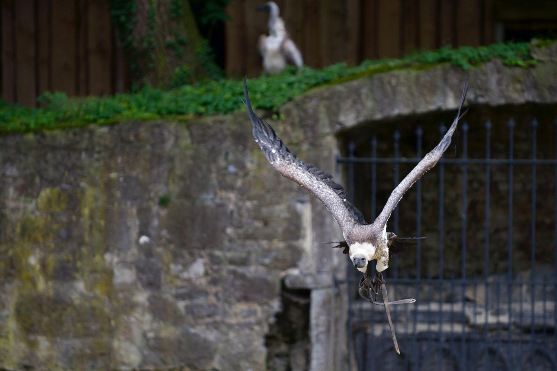 Bird show pairi daiza