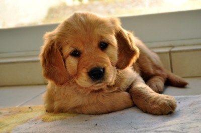 Wonderful Chub Chubby Adorable Dog - 7c70b5949be9a4c06c555657ad9b58e4  Graphic_143932  .jpg