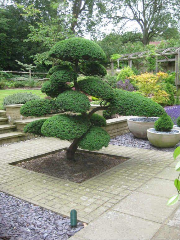 Arbre Niwaki Dans Un Jardin Japonais Avec Images Jardin