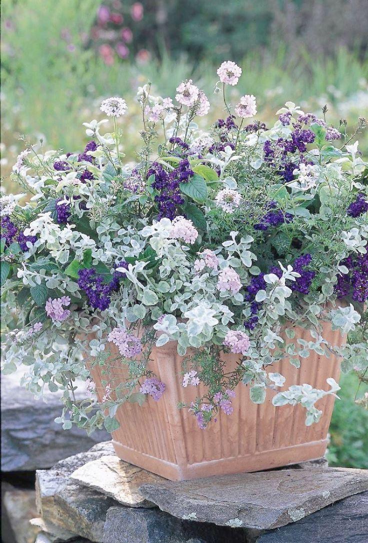 Anfänger Blumen Container Ein für gardening for