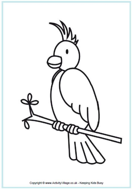 Cockatoo Colouring Page Australian AnimalsNoah