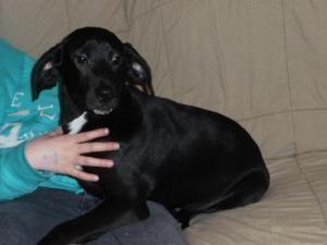 Adopt Luke On Retriever Dog Labrador Retriever Mix Pets