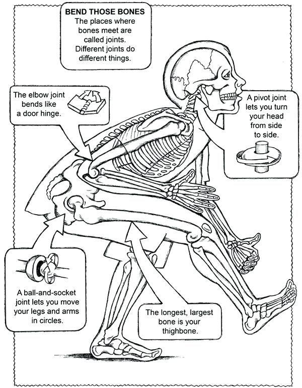 Image Result For Joints Worksheets For Kids Cuerpo Humano Anatomia Ciencias De La Naturaleza Laboratorios De Ciencias