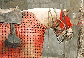 Le cheval de picador a un œil bandé (parfois les deux, malgré l'interdiction) de façon à être soumis aux ordres de son cavalier mais aussi pour ignorer la présence du taureau dont la vue ne manquerait pas de le terroriser....