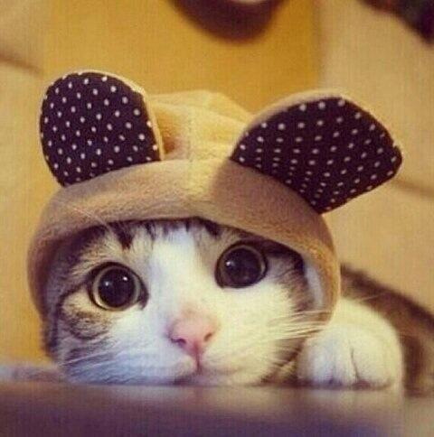 ik ben een beer!!!!