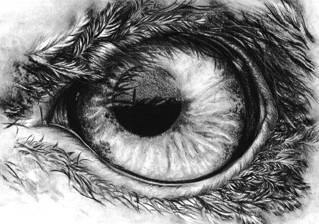 How To Draw Eagles Eagles Eye In Pencil By Kokosasih