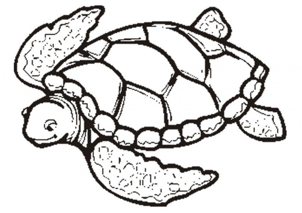 Free Printable Turtle Coloring Pages For Kids Turtle Coloring Pages Animal Coloring Pages Free Coloring Pages