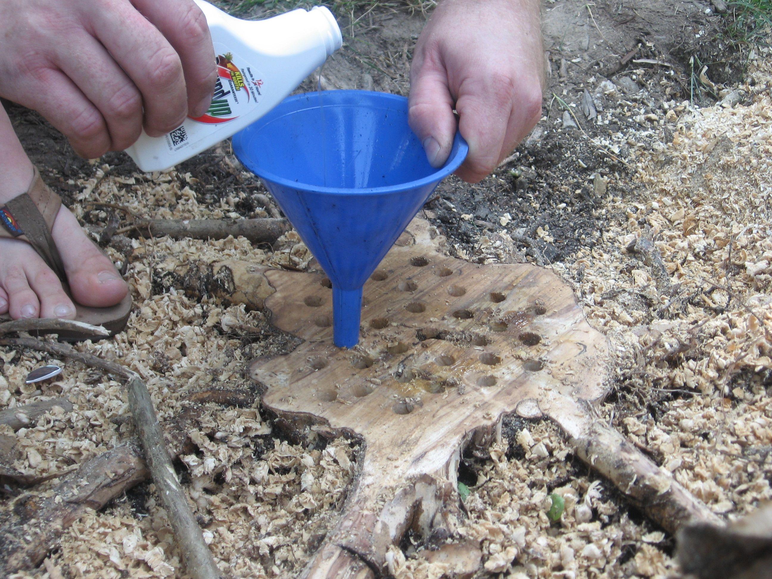 kill a tree stump need to do this with a trash tree near the drain