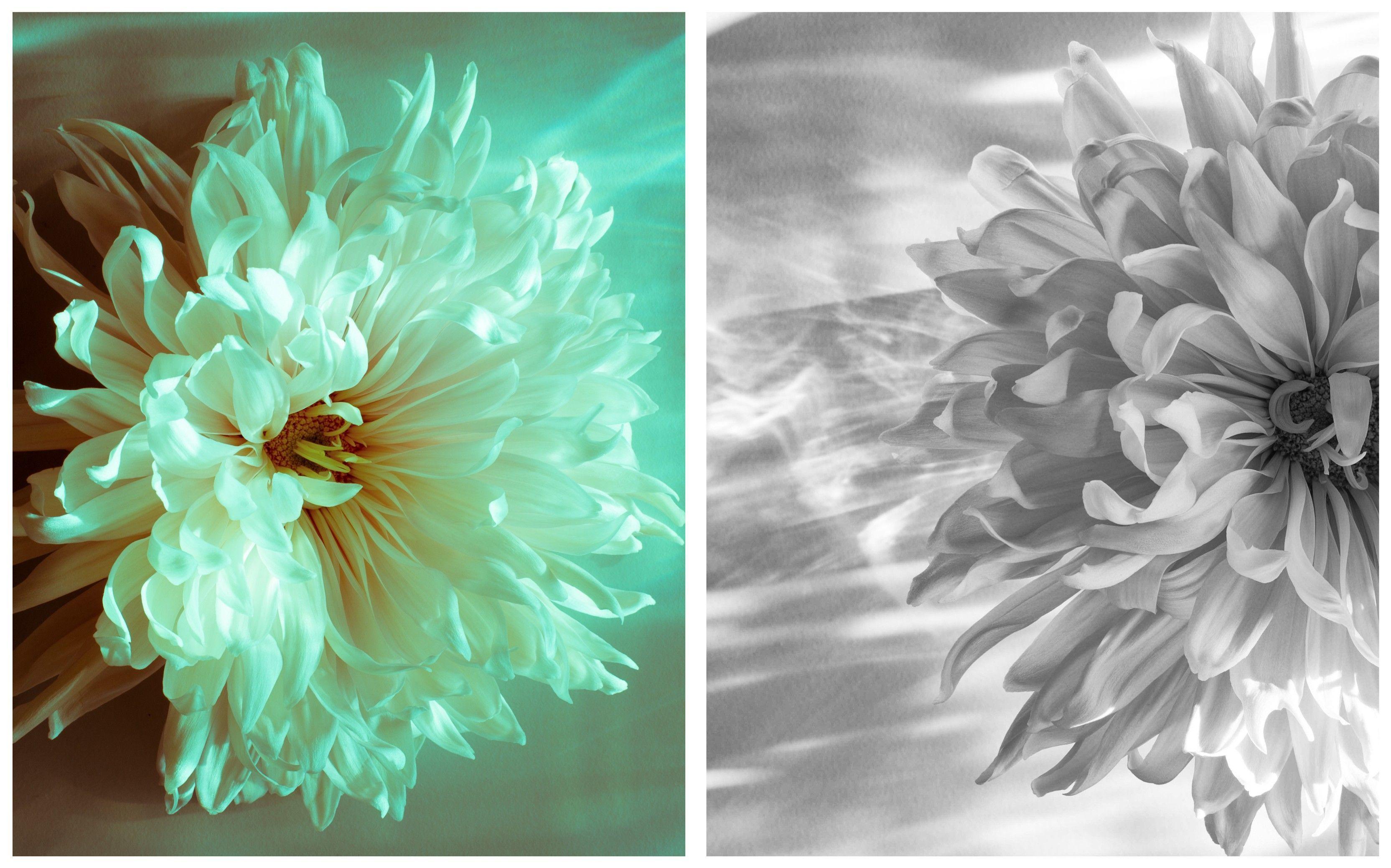 lesson 1b basic studio chrysanthemum light emma davies