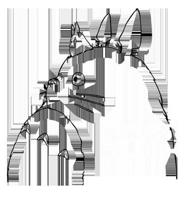 Istebrak User Profile | DeviantArt