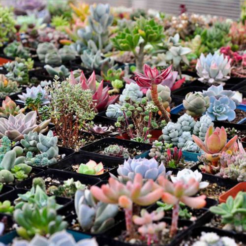 Sale 100 Assorted Succulent Seeds Succulents Por Themessyplanter