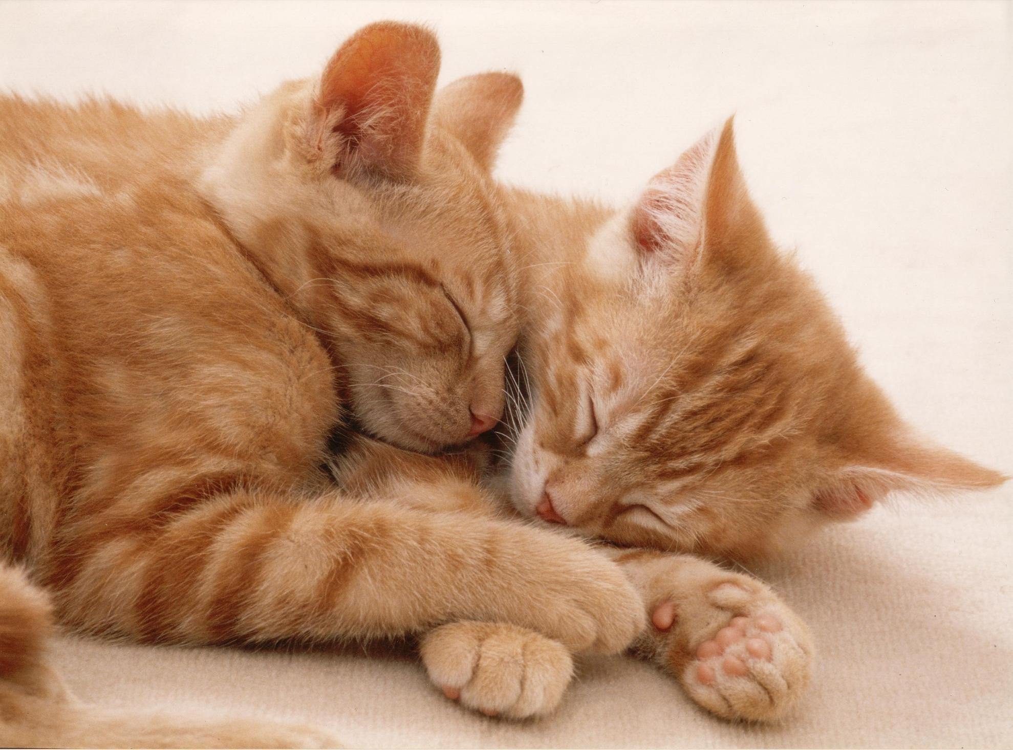 Pin Von Marion Auf Kitties Katzen Schlafende Katze Katzenbabys
