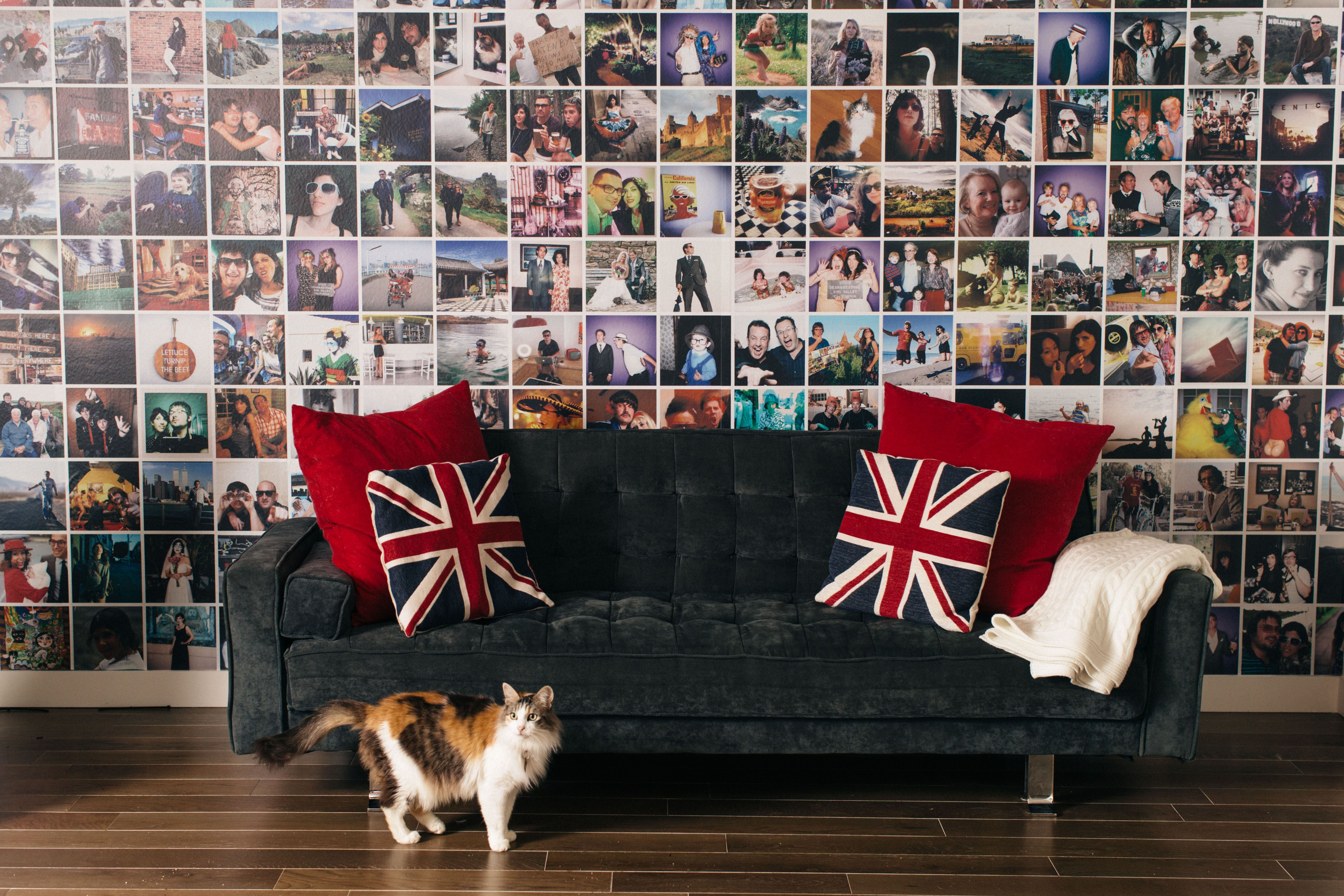 """PicMe's """"MultiPic Wall Mural."""" (plus Franka the cat"""