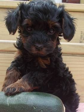 Pin By Cathy Young On Lovable Furry Friends Cuddly Animals Cute Animals Puppies