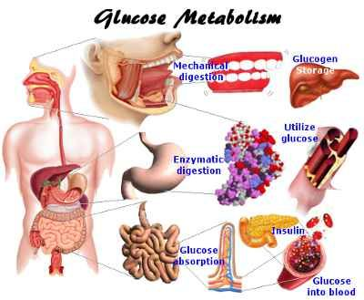 carbohydrate metabolism diabetes pinterest