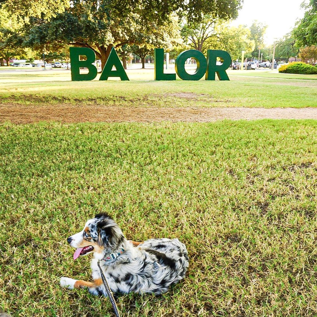Best Dog Friendly Campuses Pet Friendly Colleges Best Places For Dogs In Waco Dog Friends Best Dogs Pets