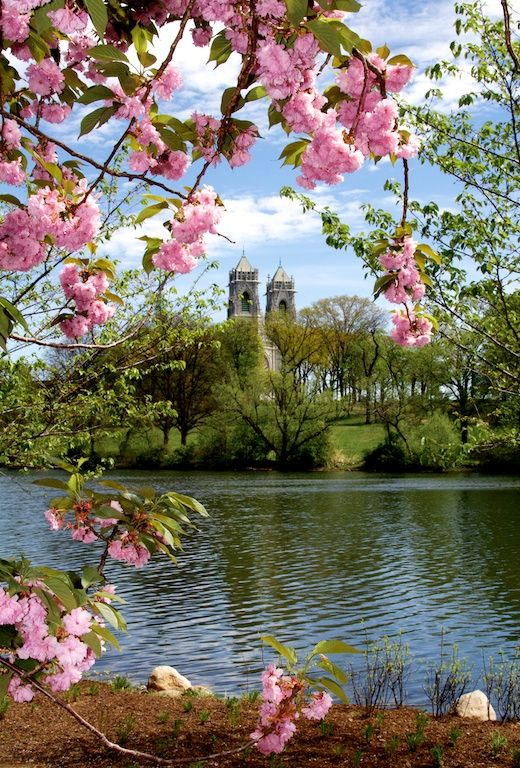 Blossoms In Branch Brook Park Pretty Places Brook Park Beautiful Travel Destinations