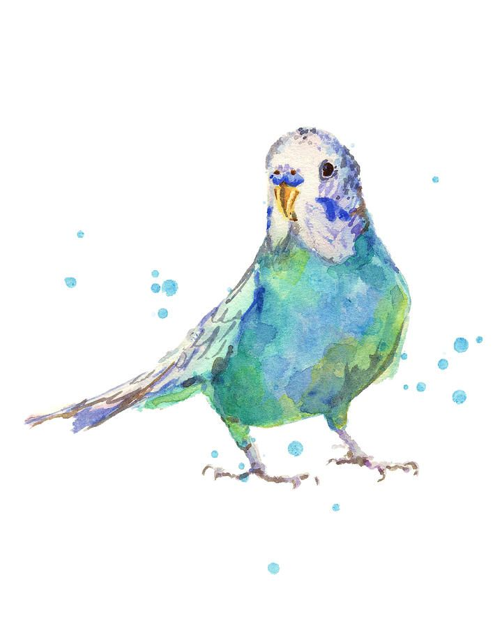 Bertie Wonderblue The Budgie By Alison Fennell Watercolor Bird