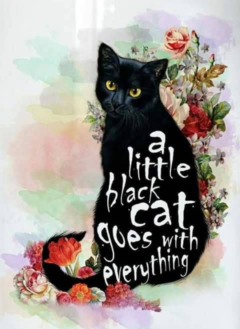 Adopt A Black Cat For Free On National Appreciation Day Black Cat Day Black Cat Appreciation Day Black Cat