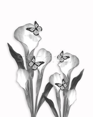 calla flower sketch  ART   Pinterest  Flower sketches