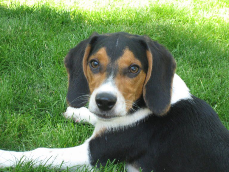List Of Hybrid Dogs Their Unusual Mixed Breed Names Dog