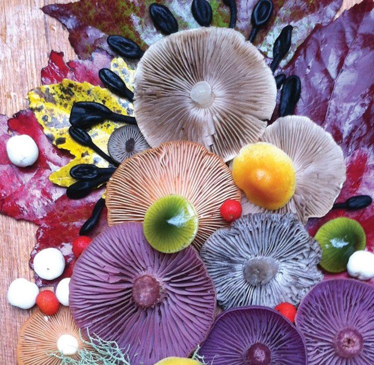 Photographer Captures Colorful Mushrooms In Vibrant Arrangements - Photographer captures the beautiful diversity of australias fungi
