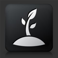 Black Square Button with Sprouting Plant Icon vector art illustration