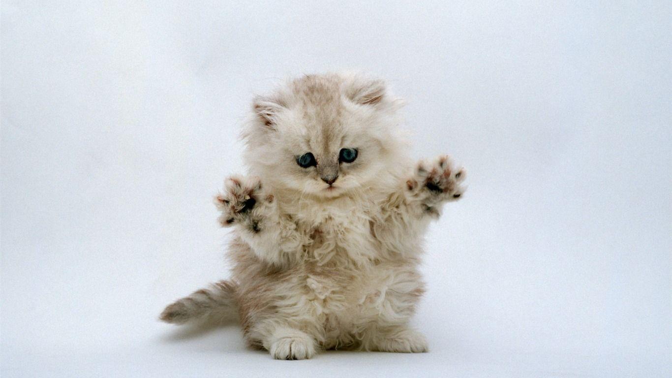 I M Gonna Get Ya 動物 かわいい 子猫 かわいい子猫