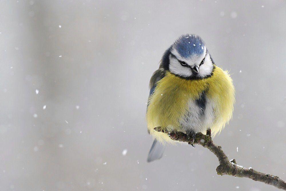 Überraschung von MarlenD.,  #MarlenD #überraschung #von #Winterbildertiere