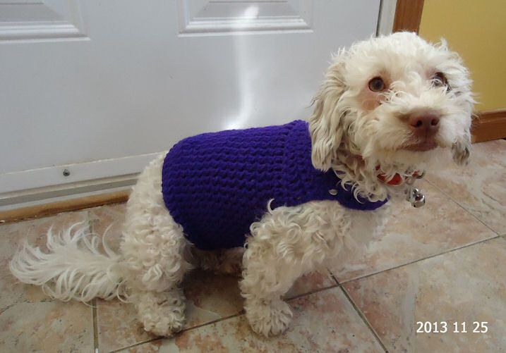 Free Dog Sweater Crochet Pattern Pinteres