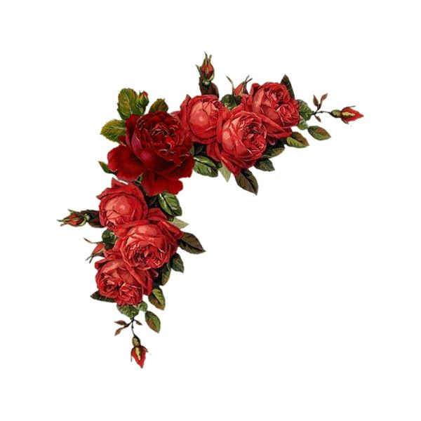 60882233 1277701395 19 Png Liked On Polyvore Featuring Flowers Frames Backgrounds Corners Effects Filler Borders A Vintage Roses Red Roses Floral Image