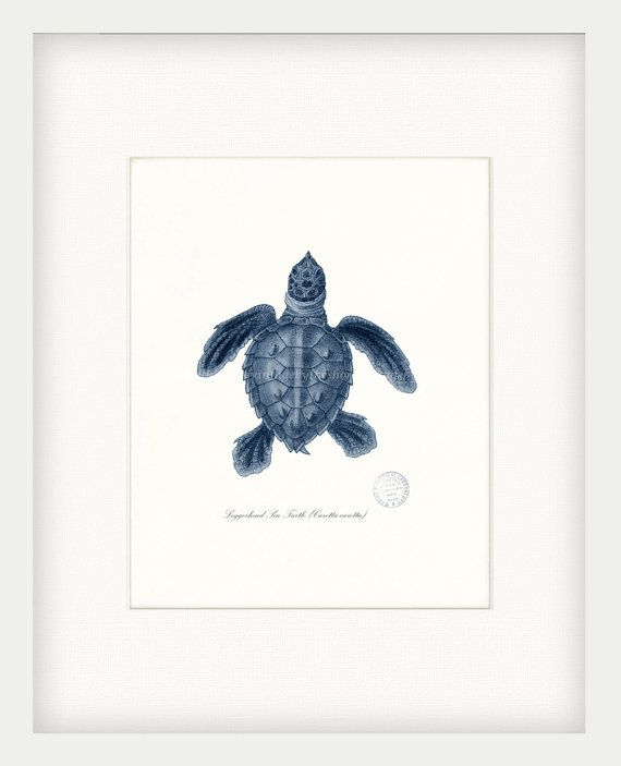 Coastal Decor Loggerhead Sea Turtle No. 2, Endangered Species Natural History Art Print 8x10 dark blue