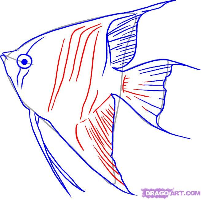How To Draw Angelfish Step By Step Fish Animals Free Online Fish Drawings Fish Coloring Page Fish Art
