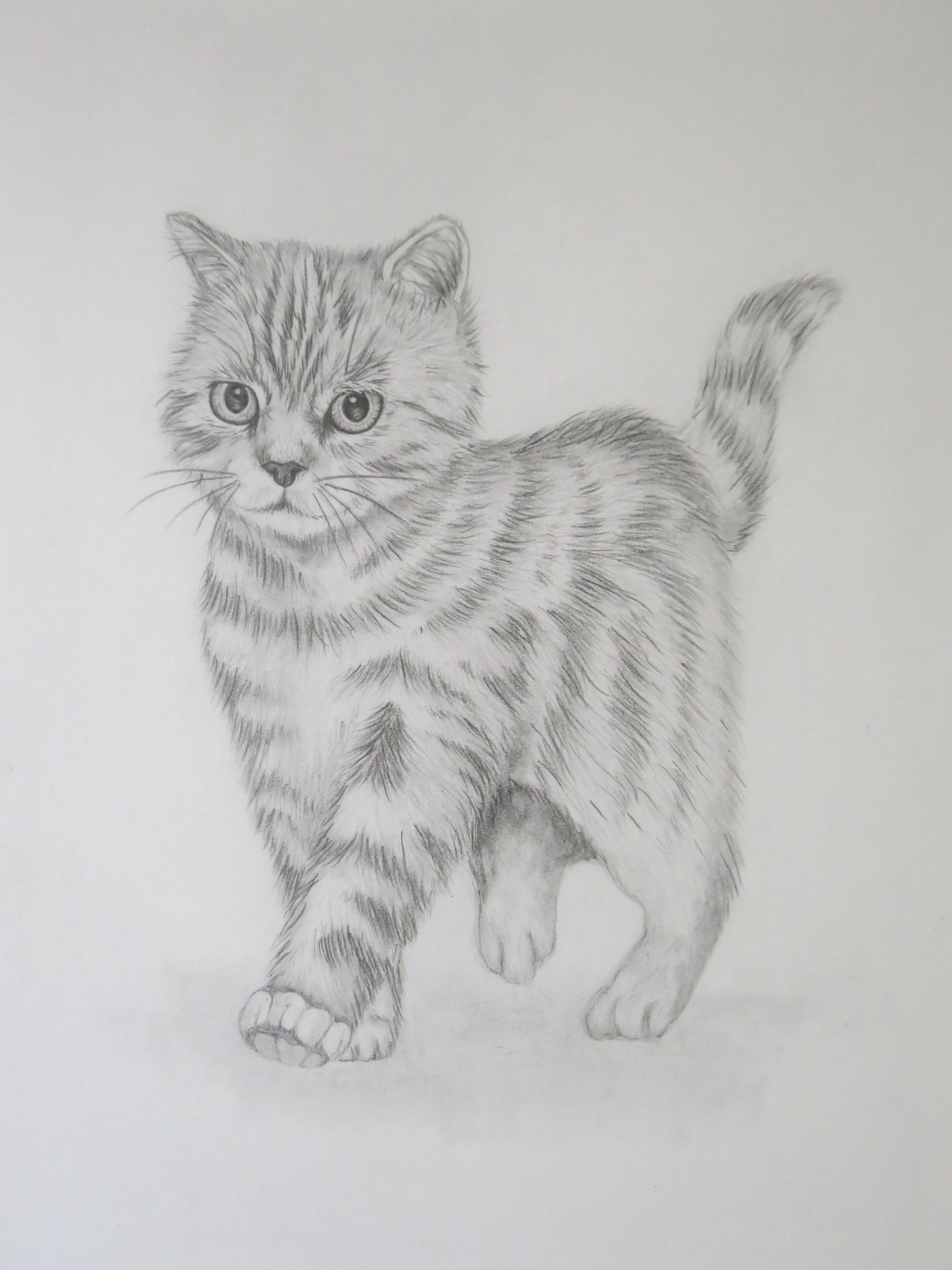 Adorable kitten pencil drawing prints now available on my etsy shop catlove kitten animals drawings pencildrawings artist sketch art etsy