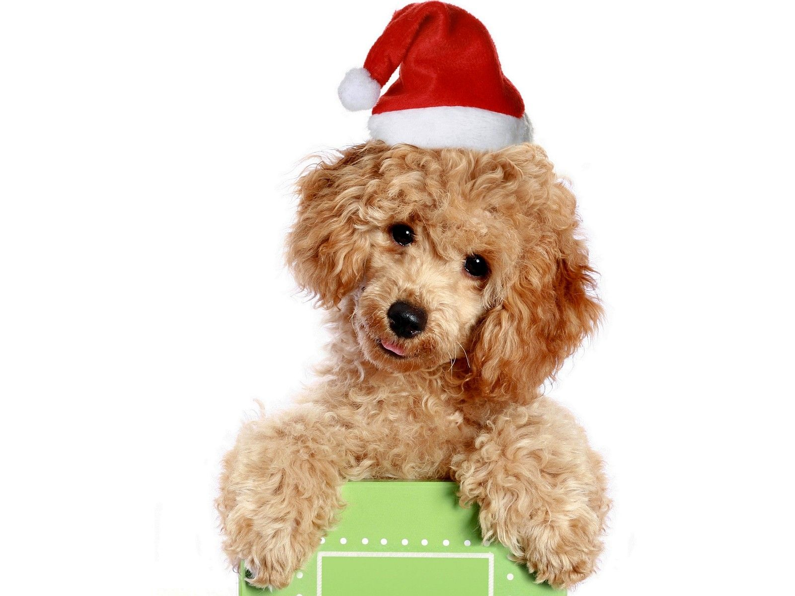 Download Your Favorite Christmas Dogs Wallpaper From Our List - Dog obsessed with stuffed santa toy gets to meet her idol in real life