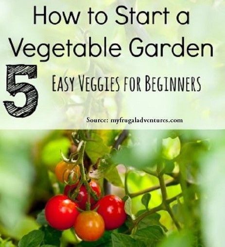 How To Start A Vegetable Garden For More Creative Tips