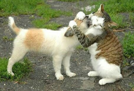 Adorable animals giving kisses