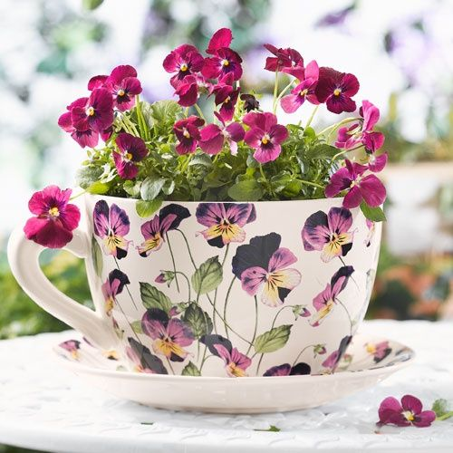 Buried Mine Half Way In The Ground To Look Like It Spilled Over With Flowers Pansies Flower Vases Tea Cups