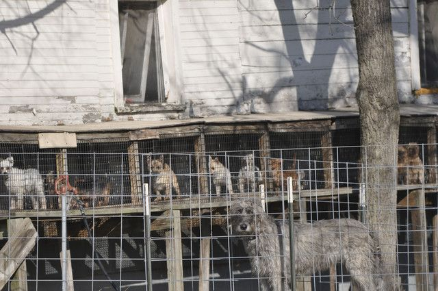 Where are the Amish puppy mills located? Any state that has