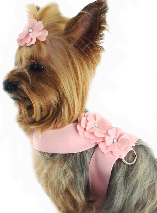 Pink Harness And Leash Extra Small Teacup Yorkie Chihuahua