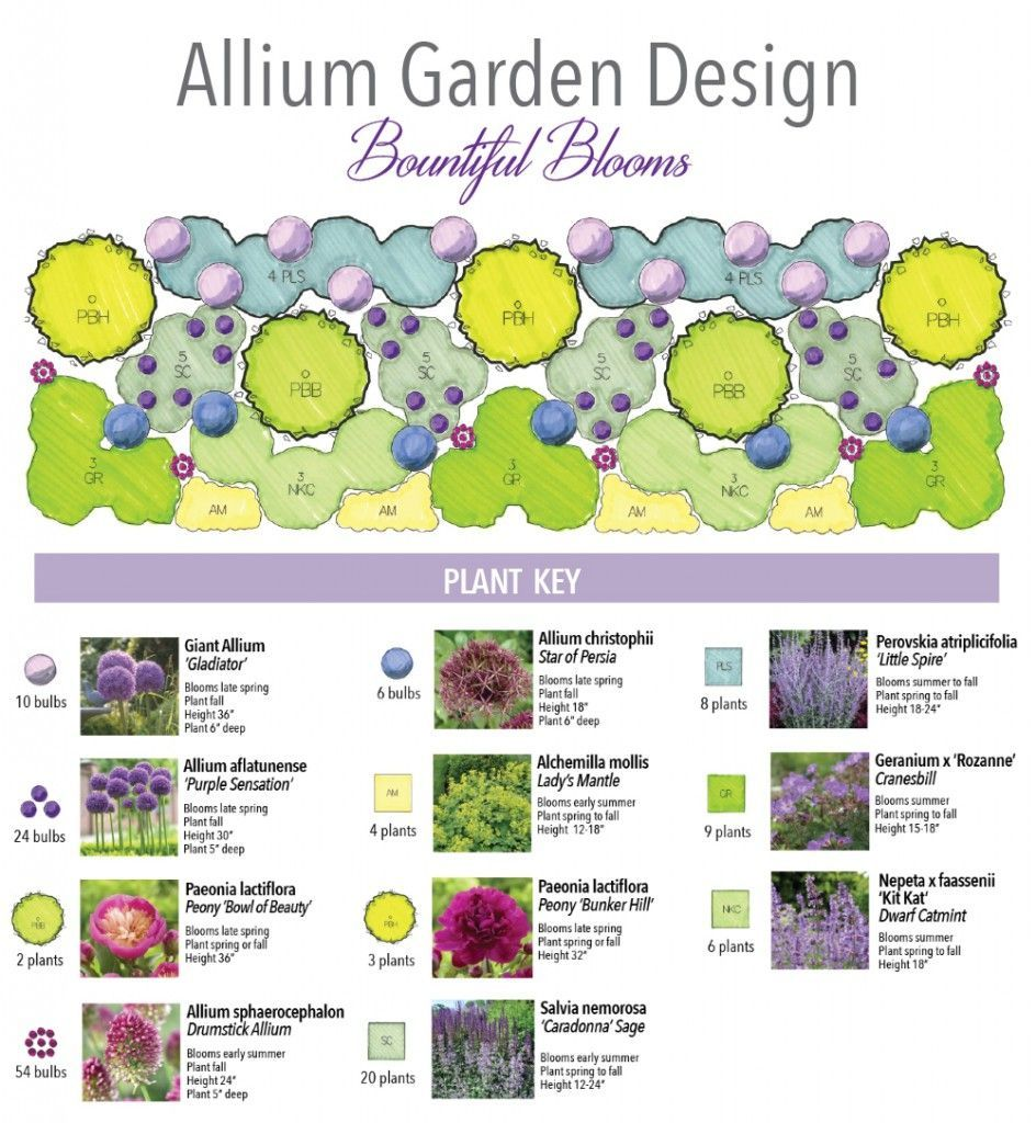 Allium garden  Bountiful Blooms, a jeweled tone perennial border highlighting the spherical, fluffy heads of alliums from Longfield Gardens and Thinking Outside the Boxwood is part of Allium garden, Perennial garden design, Front garden design, Azaleas garden, Small garden design, Garden design layout - Bountiful Blooms, a jeweled tone perennial border highlighting the spherical, fluffy heads of alliums from Longfield Gardens and Thinking Outside the Boxwood is part of Allium garden