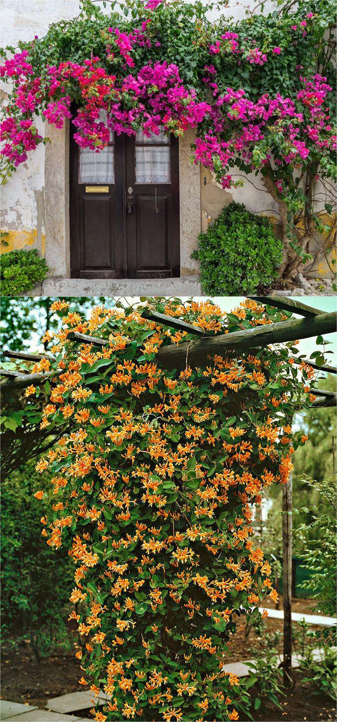 all year climbing plants