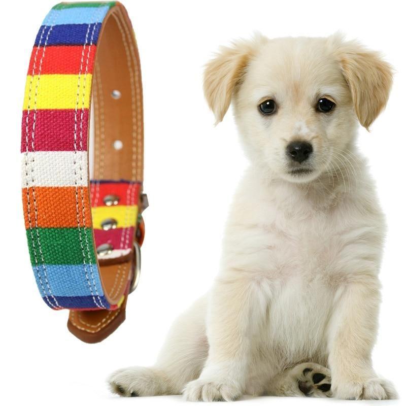Rainbow Leather Dog Collar Rainbow Dog Collar Rainbow Dog Leather Dog Collars