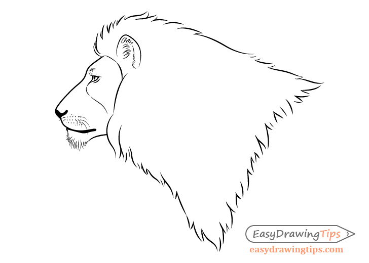 How To Draw A Lion Full Body Step By Step Easydrawingtips En 2020 Alibaba.com offers 1,519 lion eyes products. pinterest
