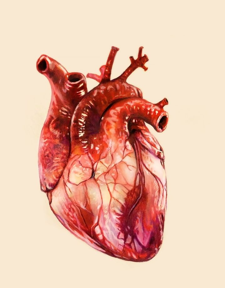 Heart Study, an art print by Morgan Davidson