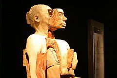 Body Worlds - Wikipedia, the free encyclopedia