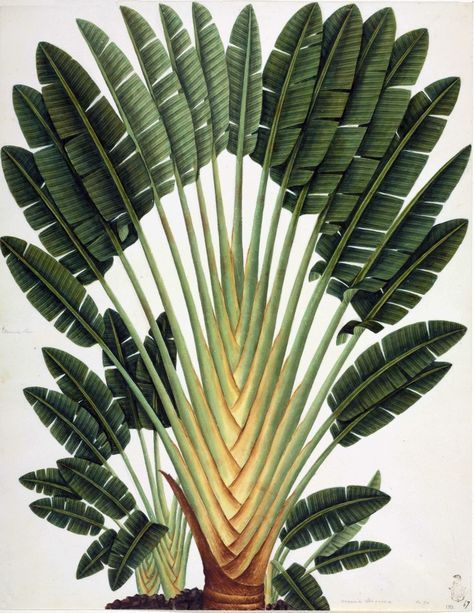 3567.Botanical Palm tree POSTER.Science name.School Home Room Art decoration  | eBay#3567botanical #art #decoration #ebay #home #nameschool #palm #posterscience #room #tree